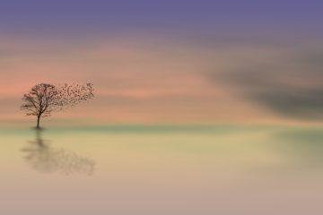 arbre crépuscule